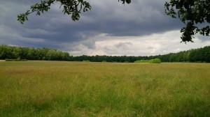 Die Hofewiese in der Dresdner Heide