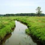 Das Flüsschen Swędrnia, östlich von Kalisz